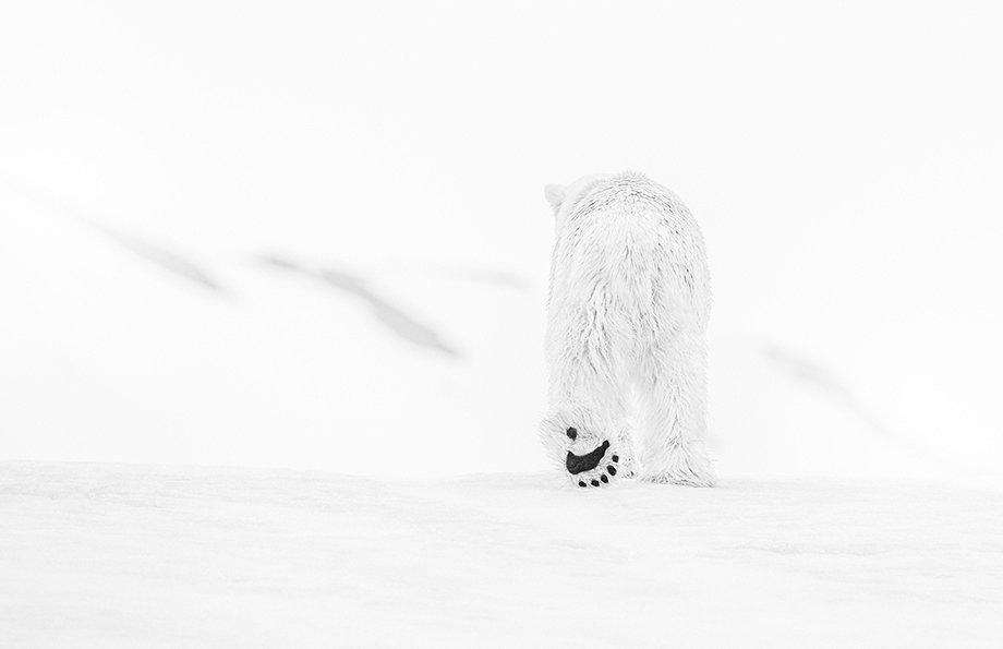 Foto: David Yarrow