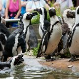 Foto: Burgers' Zoo